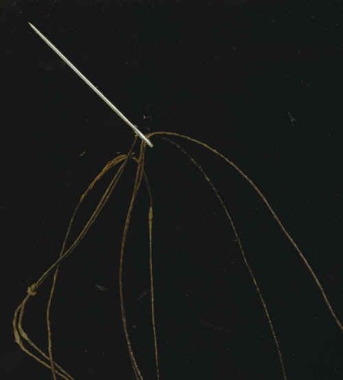 st01.jpg